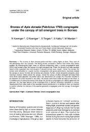 Drones of Apis dorsata (Fabricius 1793) congregate - HAL