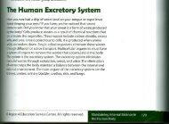 The Human Excretory $ystem - TeacherWeb