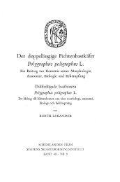 Der doppeläugige Fichtenbastkäfer Polygraphus poligraphus L.