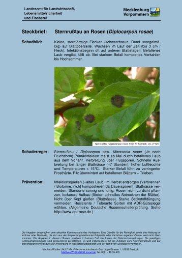 Steckbrief: Sternrußtau an Rosen (Diplocarpon rosae) - Lallf.de