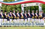 08 I 13 - Mecklenburger Pferde