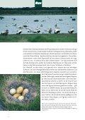 Island Reportage - Betten Thaler - Seite 6