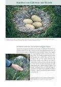 Island Reportage - Betten Thaler - Seite 7