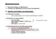 Membranpotenzial und Aktionspotenziale