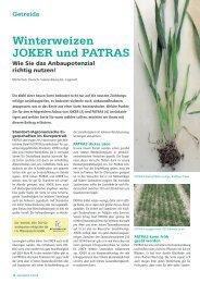 Winterweizen JOKER und PATRAS - DSV