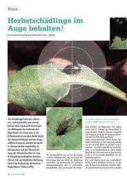 Herbstschädlinge im Auge behalten! - DSV