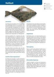 Heilbutt - Fisch