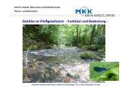 Gehölze an Fließgewässern - Funktion und Bedeutung - - GfG