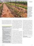 Über Landesgrenzen hinweg (aus: GIZ-Magazin akzente 4/2013) - Seite 4