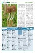 Bedingt glaubwürdig - Hanfjournal - Page 5