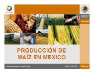 Producción de maíz en México - InfoRural.com.mx