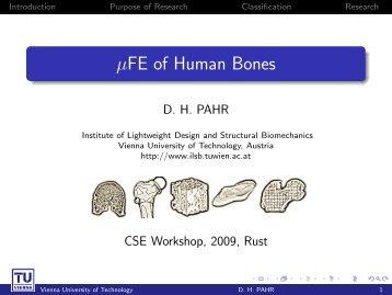 FE of Human Bones