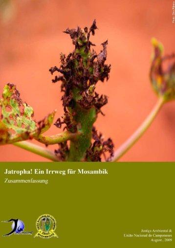 Swissaid-Report: Jatropha! Ein Irrweg für Mosambik