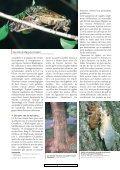 Mai en Amérique du Nord - Page 2