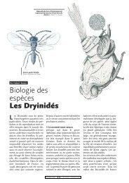 Les Dryinidés / Insectes n° 127