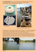 Bana Linga(Shiv Ling, Ling) or Narmada Ling ... - Interessantes AT - Seite 3