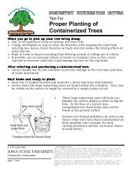 Proper Planting of Containerized Trees