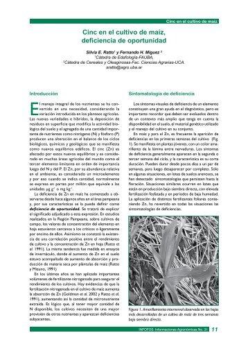 Cinc en el cultivo de maíz, deficiencia de oportunidad