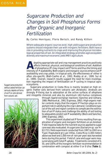 how to add phosphorus to soil