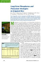 Long-Term Phosphorus and Potassium Strategies in Irrigated Rice