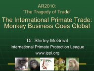 Monkey Business Goes Global - International Primate Protection ...