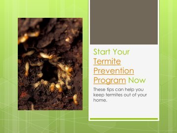 Start Your Termite Prevention Program Now
