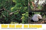 Der Harpyie-Adler braucht den Regenwald. Hans und - WWF Schweiz