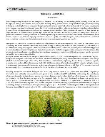 Transgenic Basmati Rice