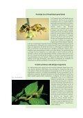 100 de las especies exóticas invasoras más dañinas del mundo - Page 4