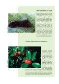 100 de las especies exóticas invasoras más dañinas del mundo - Page 7
