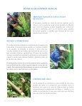 Manual de IdentIfIcacIón y Manejo de Malezas en las Islas galápagos - Page 6