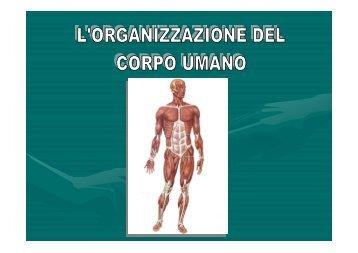 organizzazione del corpo umano - Istituto Sant'Anna