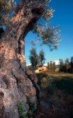 Cykla_Sidorna_1-6:Cykla i Italien - Italienska Statens Turistbyrå - Page 6