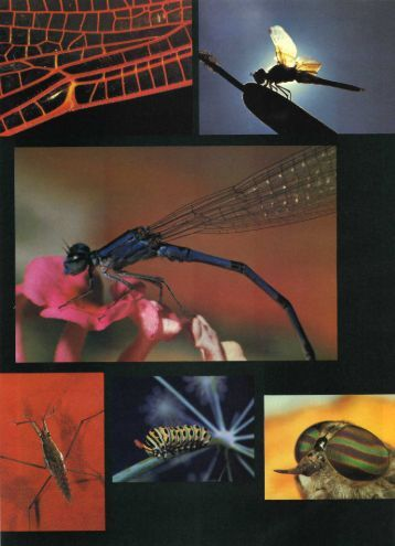 Art of Insect Photography - Jack and Sue Drafahl
