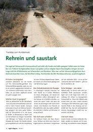 BJV-Initiative Schwarzwild