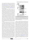 Neisserial Omp85 Protein Is Selectively Recognized and Assembled ... - Page 6