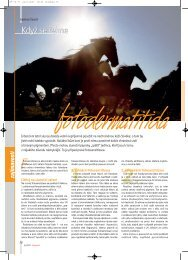 Když se řekne fotodermatitida - Jezdectví