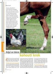 Nemoci koní: Když se řekne kohoutí krok - Jezdectví