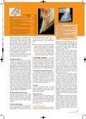 Když se řekne laminitida - Jezdectví - Page 2