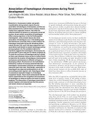 Association of homologous chromosomes during ... - ResearchGate