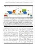Regulation of the floral repressor gene FLC - John Innes Centre - Page 4