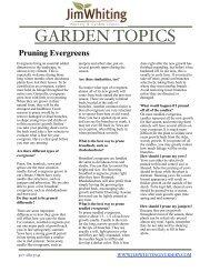 Pruning Evergreens - Jim Whiting Nursery
