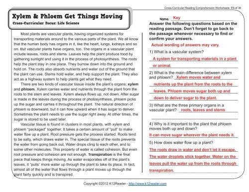 Xylem Phloem Get Things