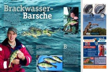 Brackwasser- Barsche - Kalles Angelshop