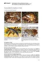 Praxismerkblatt für Amphibien im Wald - karch