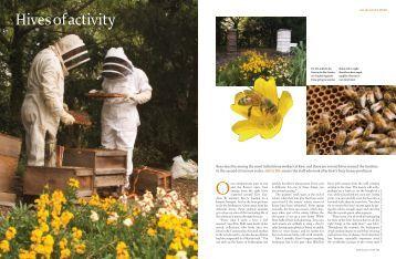 Hives of Activity (pdf) - Royal Botanic Gardens, Kew