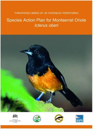 Threatened Birds of UK Overseas Territories: SAP for Montserrat ...