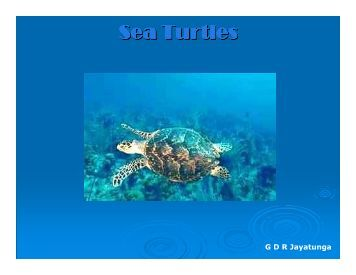 Sea Turtles - Christiealwis.com