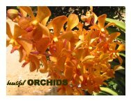 Beautiful ORCHIDS - Christiealwis.com