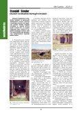 KBK füzetek 2005/3 - Kisvasut.hu - Page 6